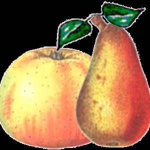 Obstler Brand
